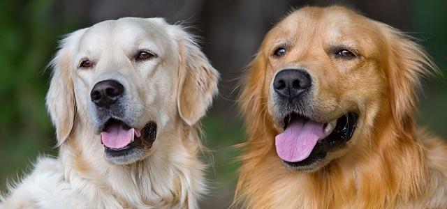 5 Πράγματα που Ίσως δεν Γνωρίζετε για τους Σκύλους-Βοηθούς Διαβήτη