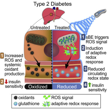 θεραπεία του διαβήτη με στατικό ηλεκτρισμό